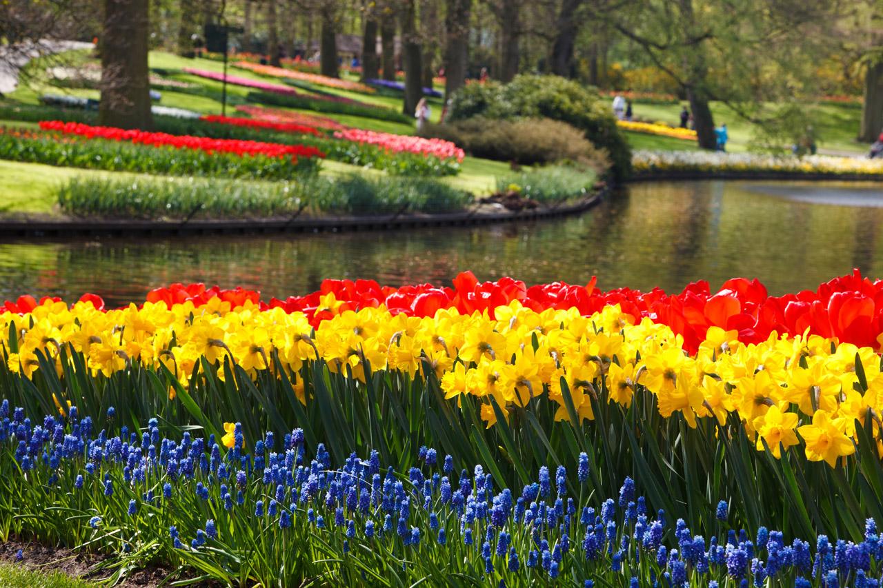 keukenhof-flower-gardens