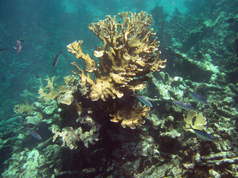 buck_island_reef_national_monument_firecoral_jackfish